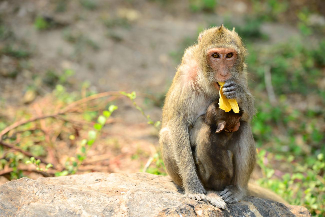 侍はバナナを知らない?時代によって変わる「日本で珍しいくだもの」のあれこれ