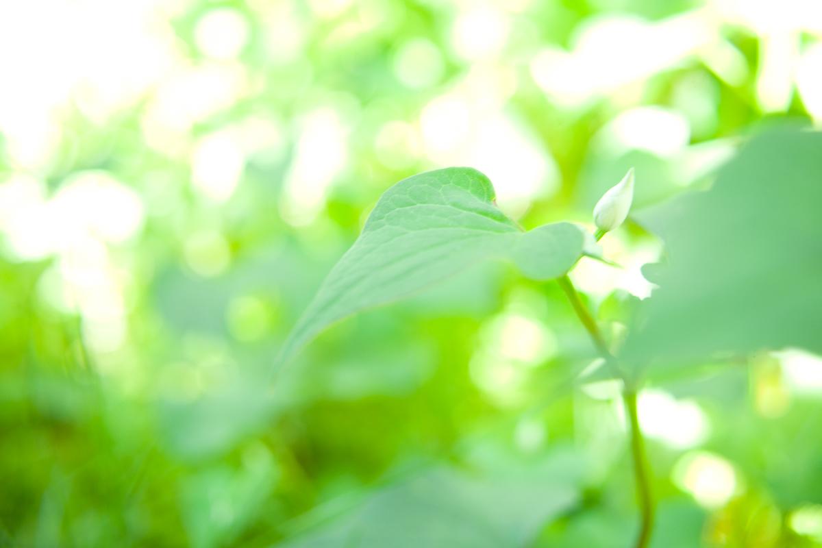 【連載】からだを慈しむ、薬草の旅 vol.1|薬草って何だろう?