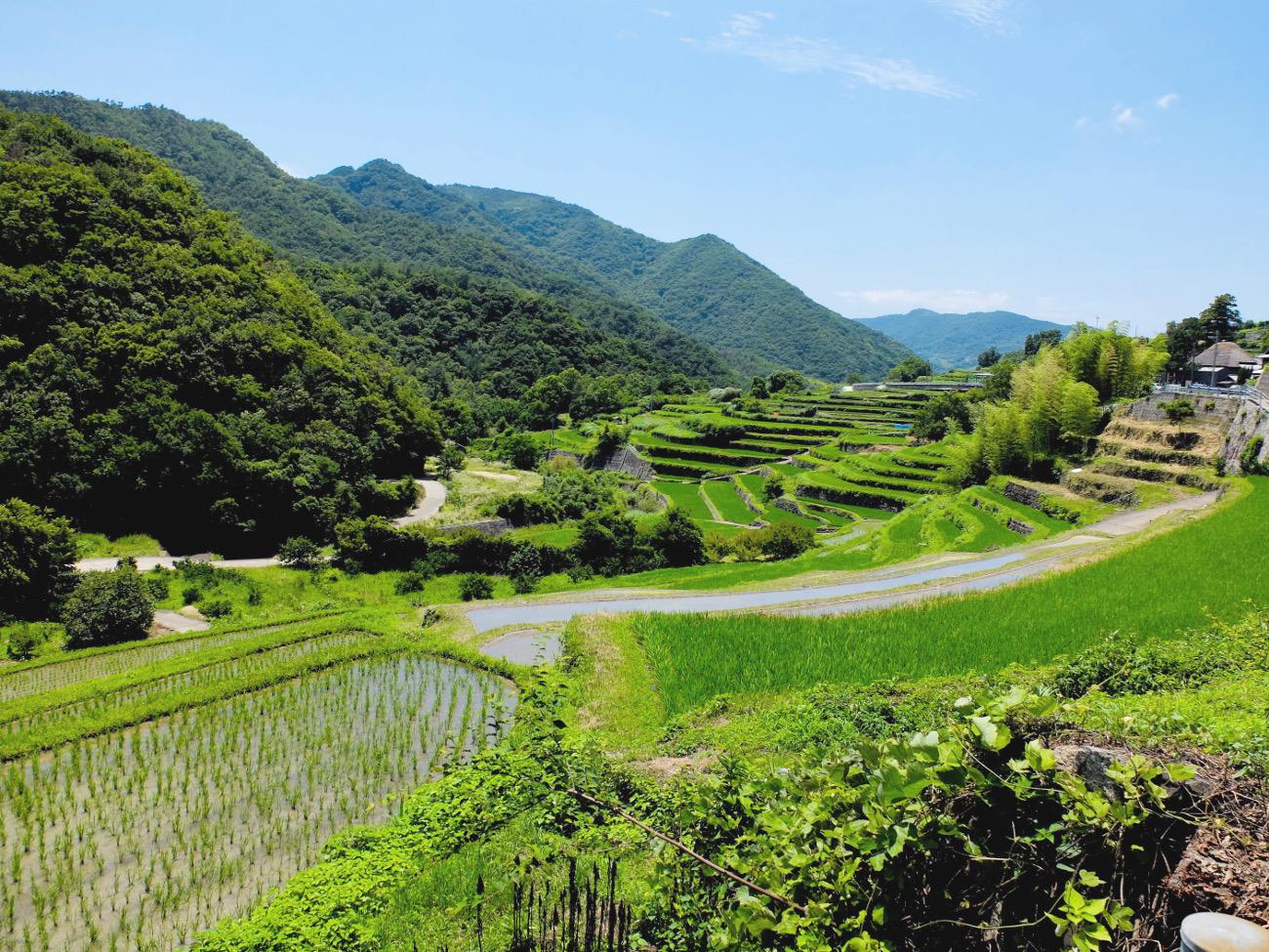 真夏の女ひとり旅のすすめ。瀬戸内小豆島で出会った景色