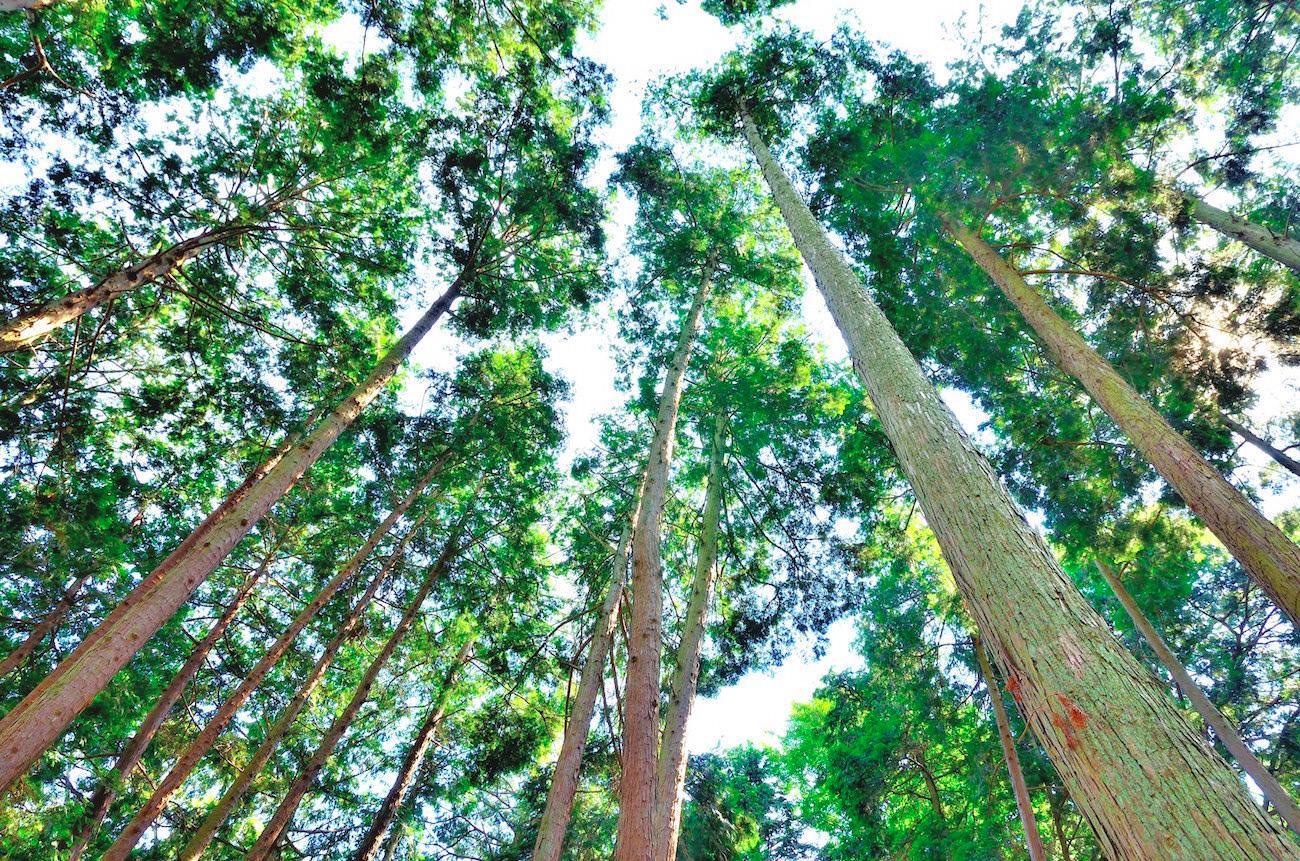 木の香りは不眠対策に効果大!「セドロール」と睡眠の関係とは?