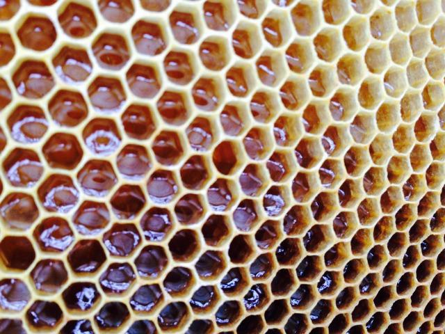 蜂が運んでくれた美味しくて美しい贈り物