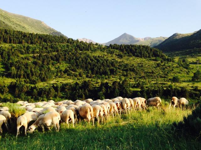 スペイン〜イタリア マクロビの旅②