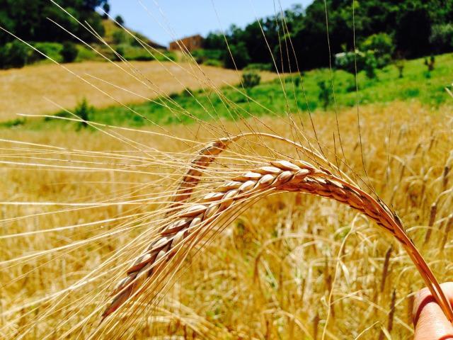 自然農の自給自足生活を堪能。お腹いっぱいイタリアツアーの巻き①