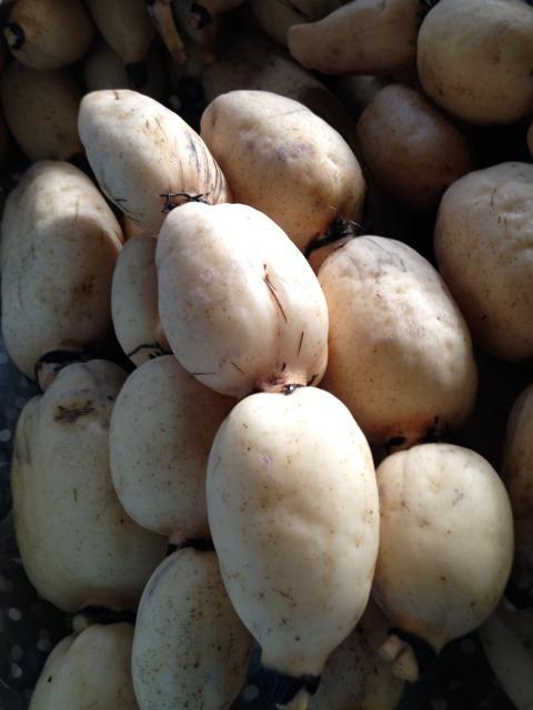 無農薬野菜を育て、買い支えて、命をつなぐ。循環型農業で生まれた、これぞ「蓮魂」!