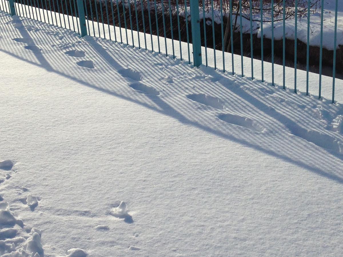 函館の雪景色