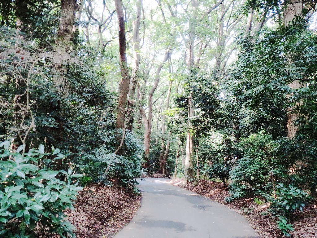 明治神宮の小道
