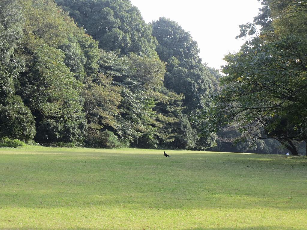 明治神宮の芝生