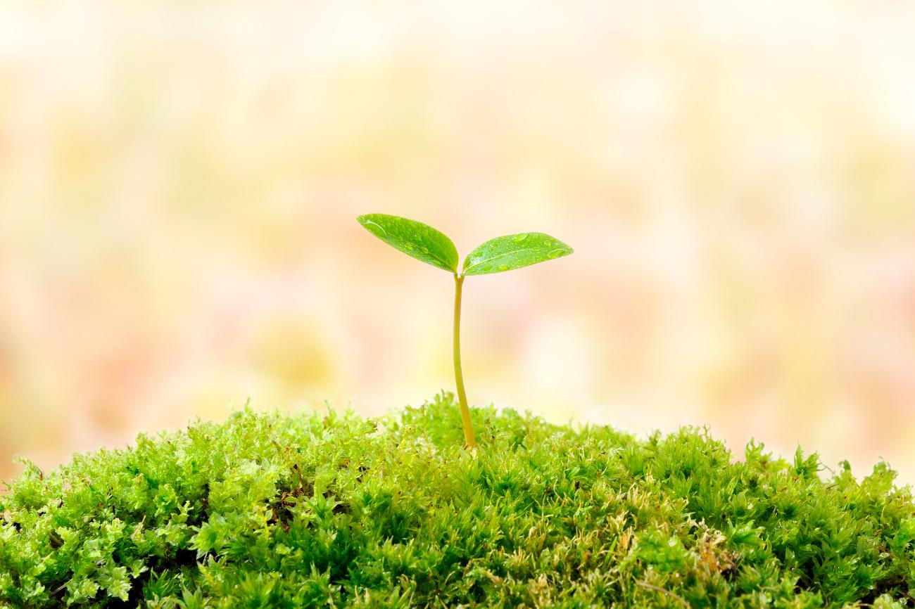 大地から出ている芽