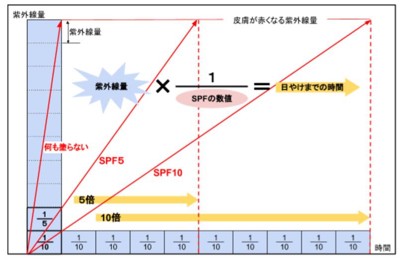 SPFのグラフ